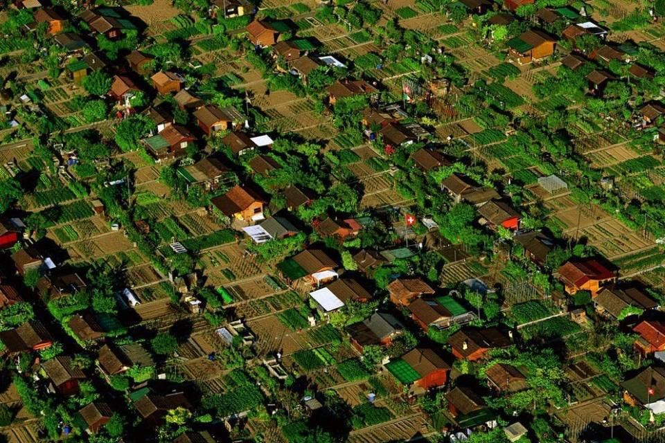FOODSCAPING REVOLUTION Grow Food Now Lawns We Should