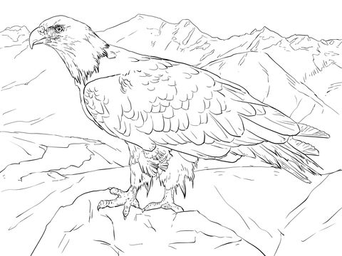 Bald Eagle from Alaska Coloring page | Coloring Fun | Pinterest