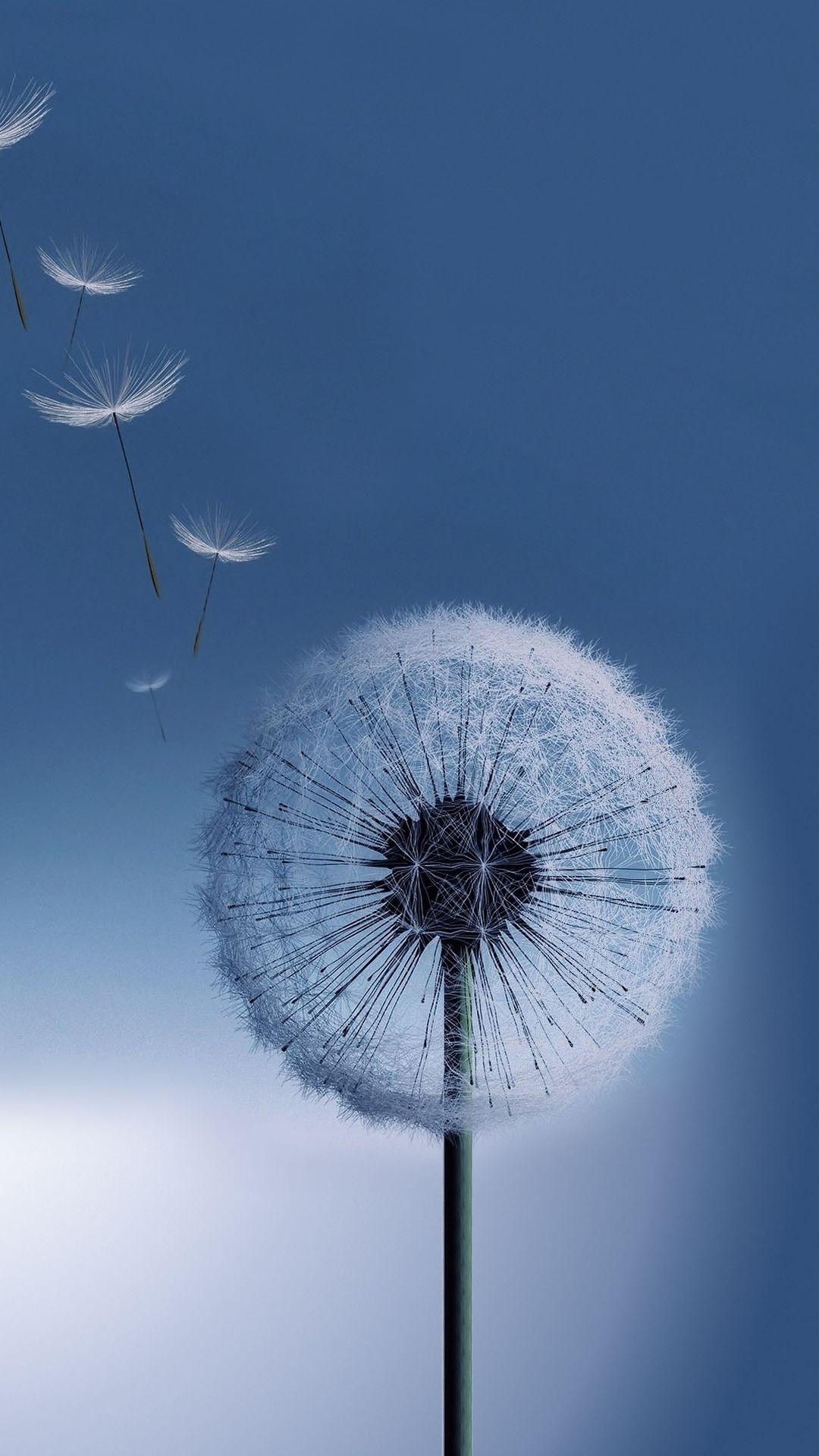 Tap And Get The Free App Nature Flying Dandelion Blue Melancholy Wind Unicolor Simple Hd Ip Hintergrund Landschaft Hintergrundbilder Hintergrundbilder Natur