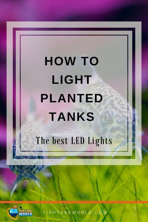 Best LED Light for Planted Tanks in 2018 | Live plants Aquariums and Fish tanks : live aquarium plants led lighting - www.canuckmediamonitor.org