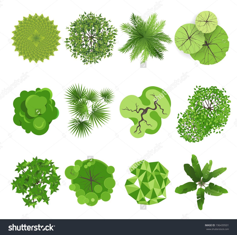схематичные рисунки растения для ландшафтного проекта: 24 тыс ... for tree plan view vector  589hul