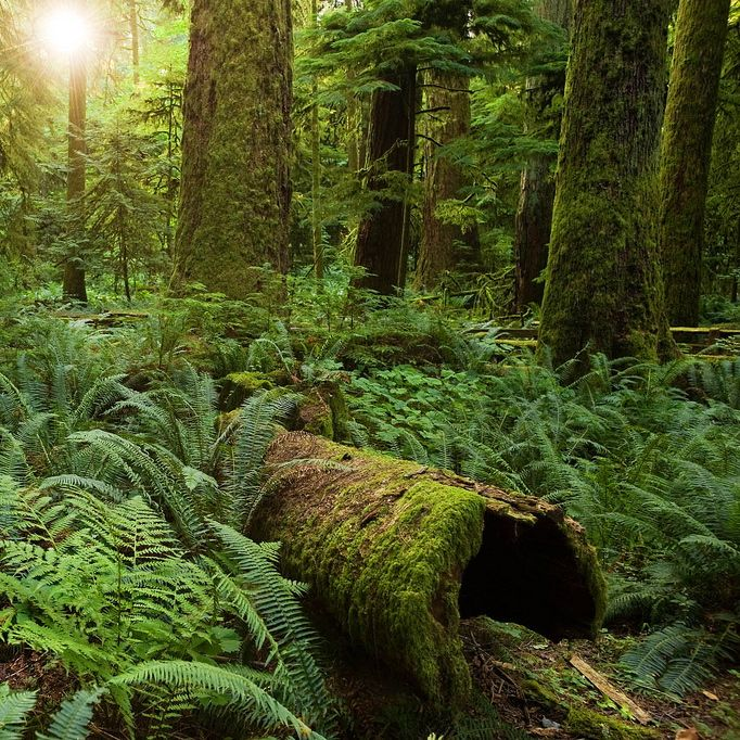 Two Seconds Of Comfort Kills Old Growth Forests