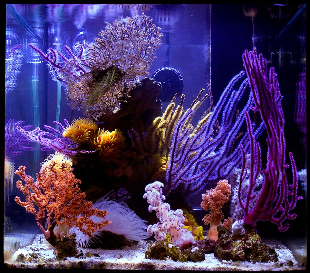 If you 39 ve been thinking about getting a new hobby for Starting a saltwater fish tank