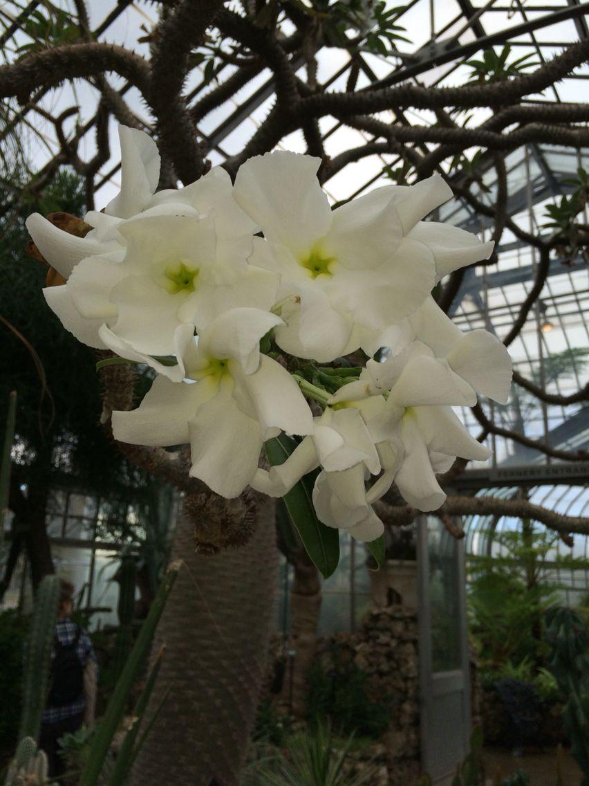 Tumblr White Flower Tumblr Pics By Me Pinterest Flower