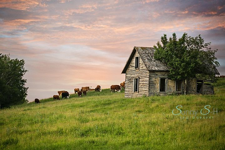 Cattle House, in the RM of Rossburn, Manitoba.  www.sunnys-hphotography.com