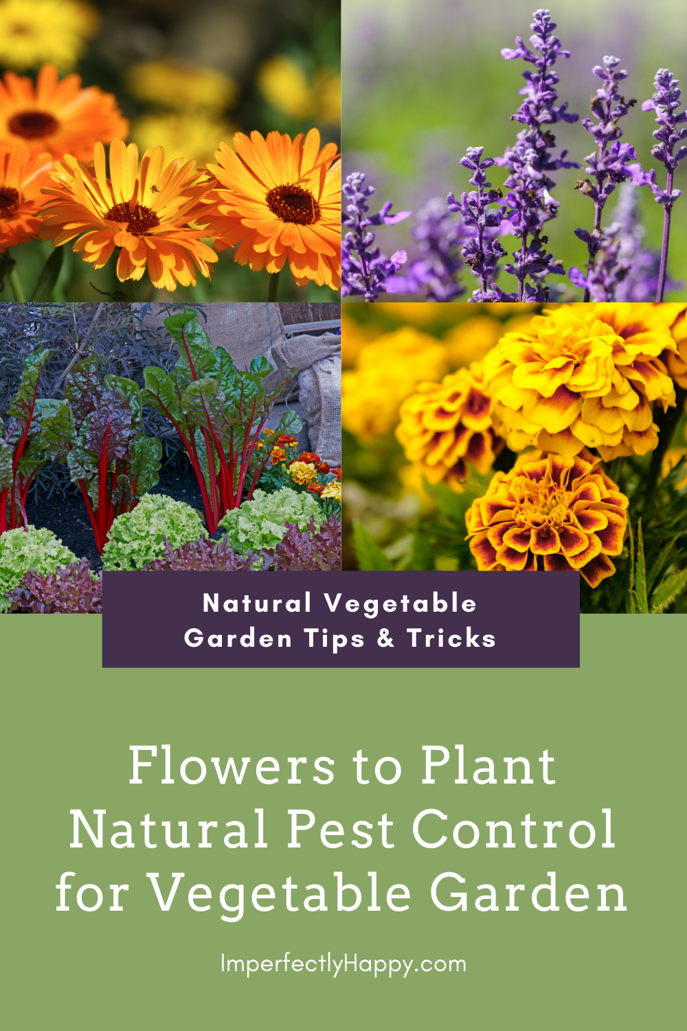Flowers to Plant in Vegetable Gardens - the Imperfectly Happy home