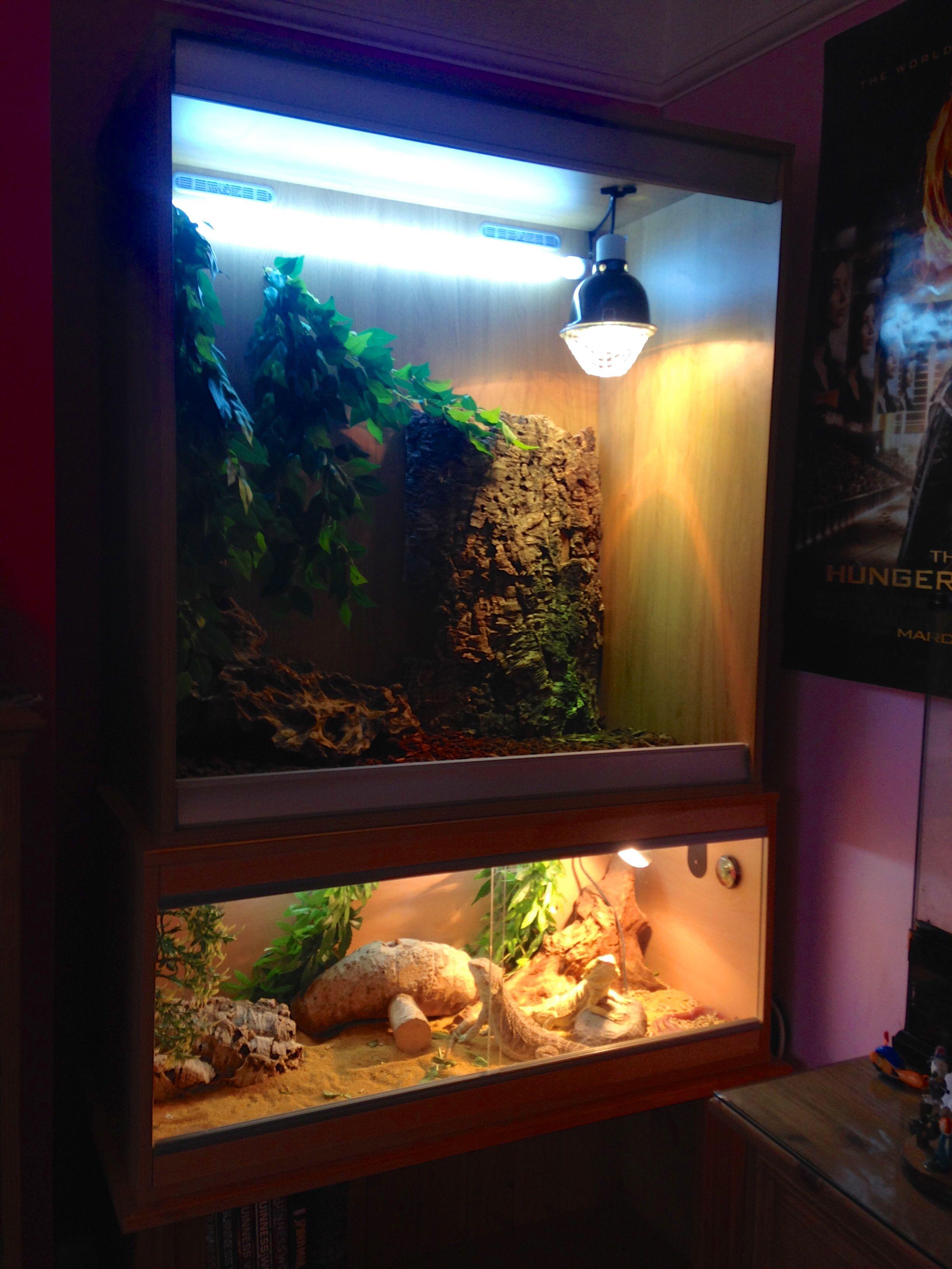 Reptile vivarium set up Lizards Pinterest Vivarium Reptiles