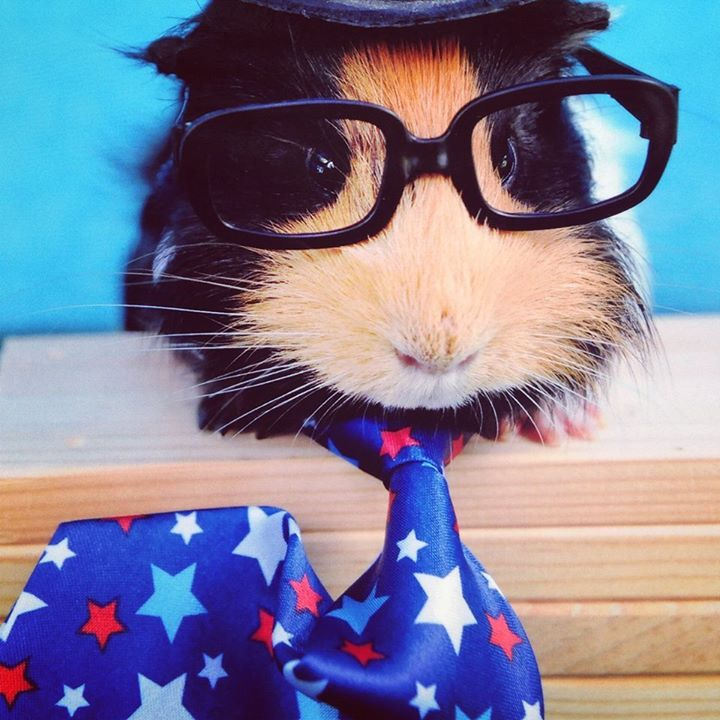 Pin on Good Ideas for Guinea Pigs
