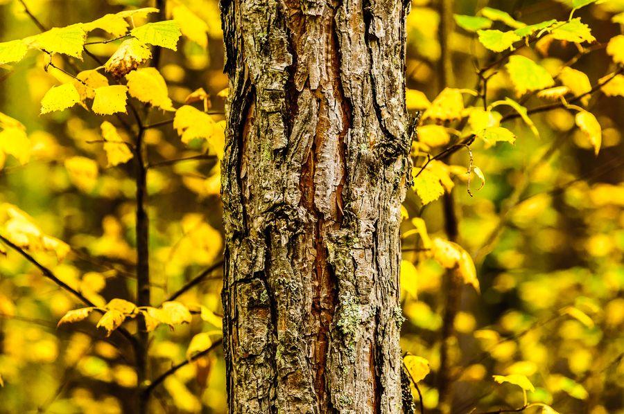 Fall in Norway (Tor Ivan Boine)