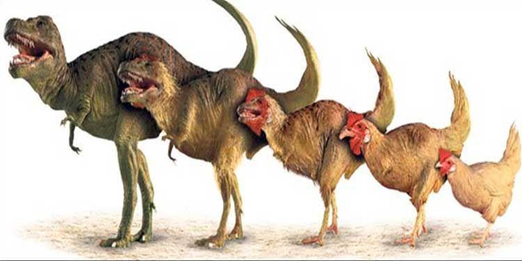 Tavuktan Dinozor