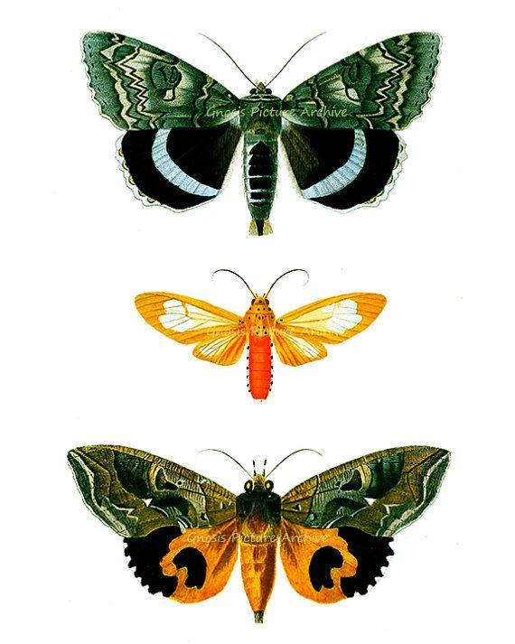 butterfly vintage art print antique prints wall art natural history decor butterflies art prints home garden nature art print prints - Orange Garden Decor