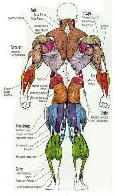 Pin by Andy on Fitnote | Pinterest | Anatomy, Muscles and Workout
