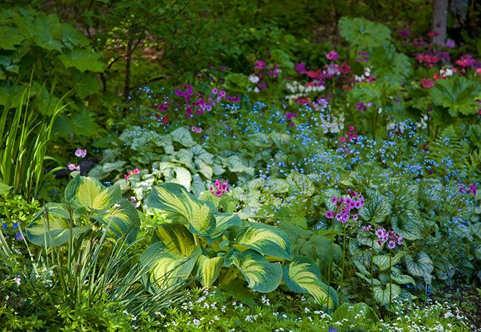 Delicately flowered brunnera and primrose work well against a backdrop of large hosta leaves. via Lowe's Creative Ideas
