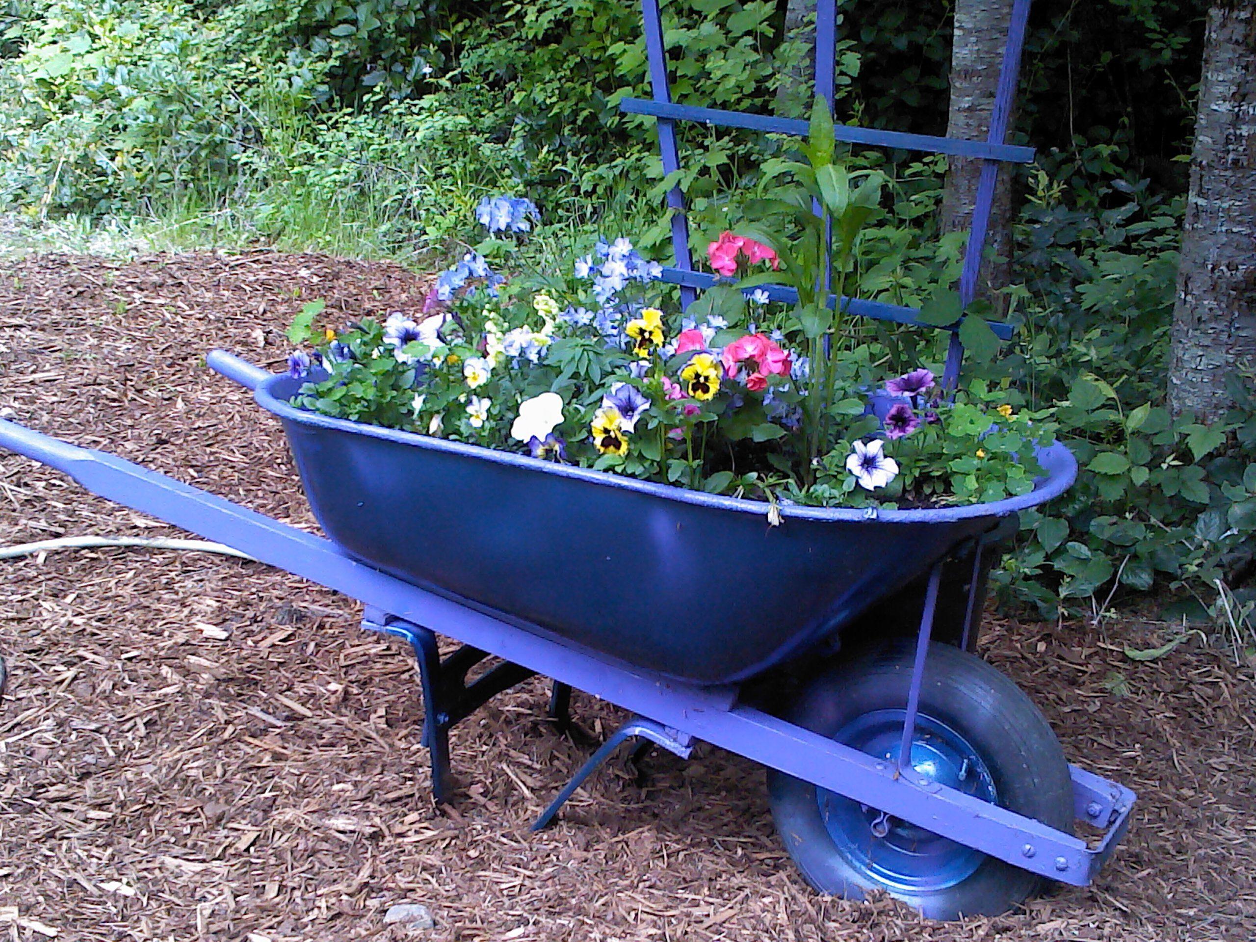Eye Catching Purple Wheelbarrow Planter Portable Garden