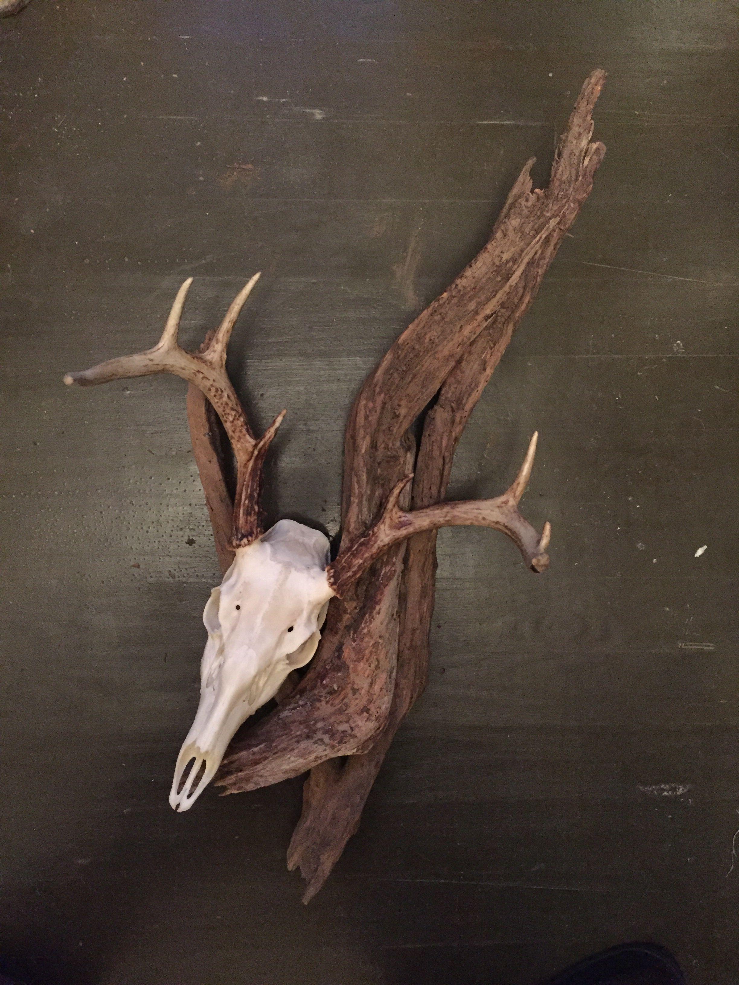 European deer skull mount on Driftwood Deer hunting decor