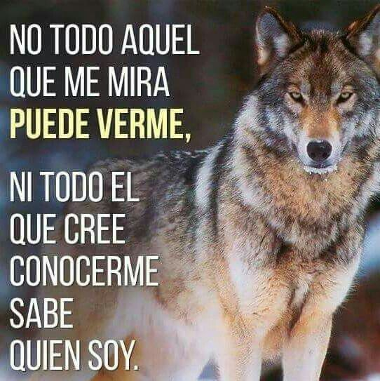 Así Es Frases De Lobos Lobos Enamorados Y Frases