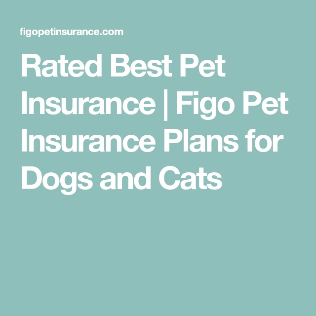 Rated Best Pet Insurance Figo Pet Insurance Plans For Dogs And