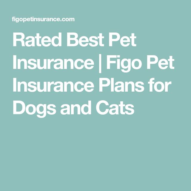 Pet Health Insurance Plans Best Medical Insurance For Pets Pet Health Insurance Health Insurance Plans Best Health Insurance