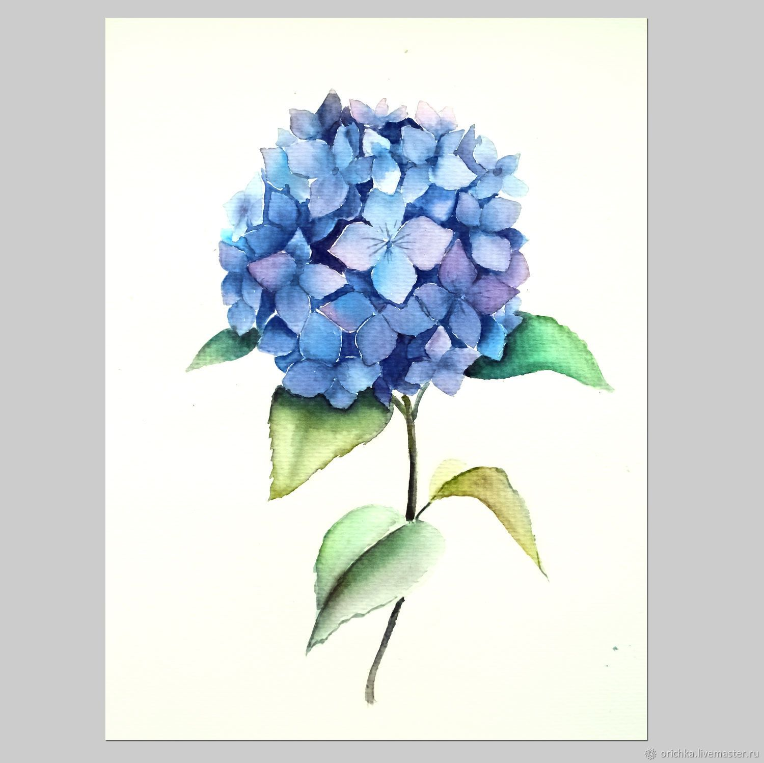 Painting Watercolor Hydrangea Shop Online On Livemaster With Shipping F2xnxcom Novosibirsk Watercolor Hydrangea Blue Flower Painting Flower Drawing