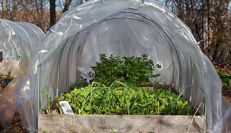 How To Build A Greenhouse Diy Winter
