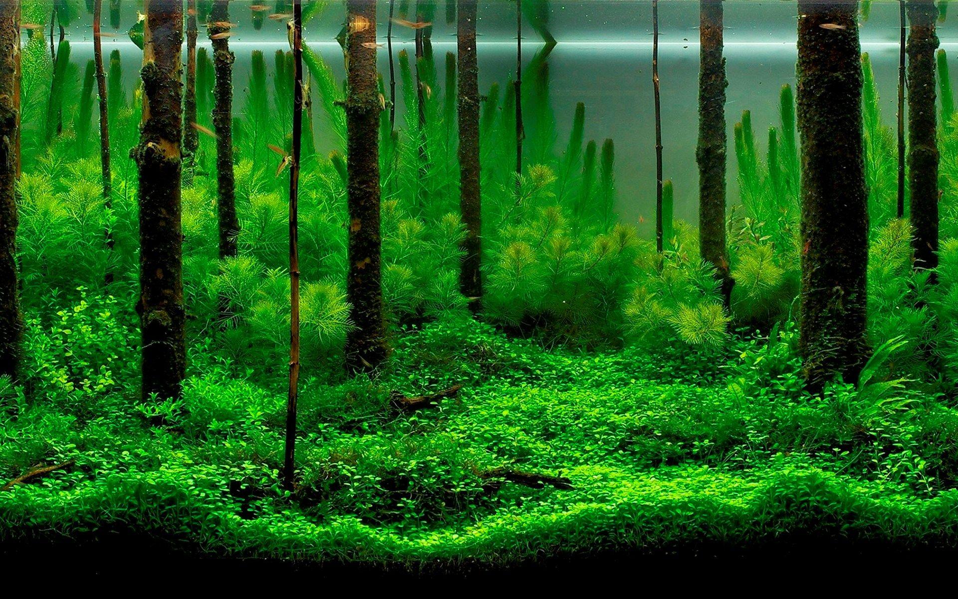 aquarium desktop wallpaper pictures free aquarium sticker