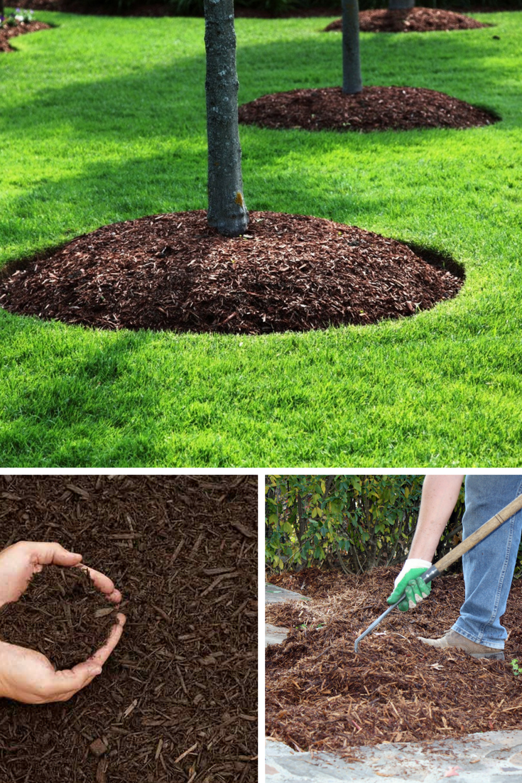Mulching The Best Ways To Follow For Healthy Trees Prunin Arboriculture And Landscapes Garden Hacks Diy Mulching Vegetable Garden Tips