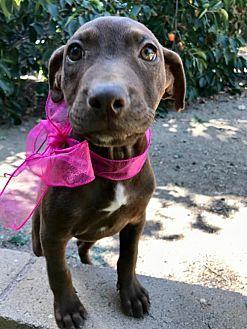 Pin By Katherine Turner On Adopt A Doggie Labrador Retriever Mix Labrador Retriever Pets