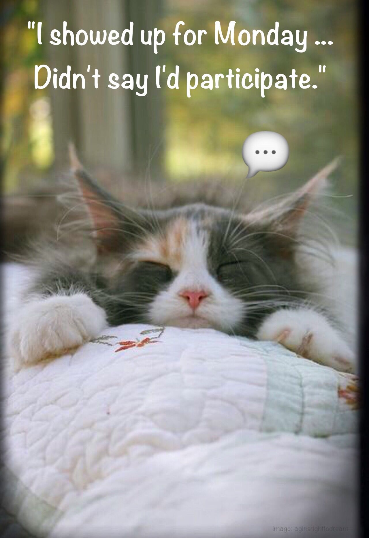 Happy Monday Monday Humor Animal Funny Cute Cat New Day
