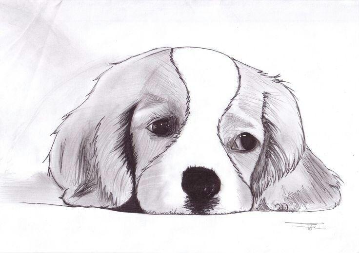 заметили рисунки животных рисовать собаку всего мира