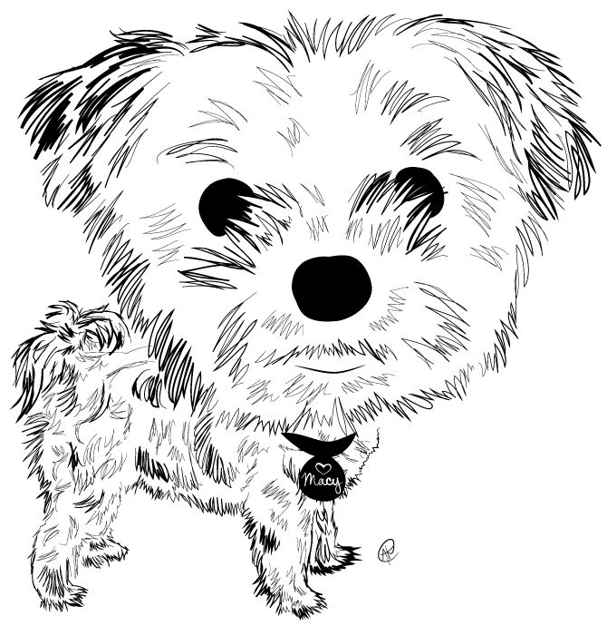 Morkie Charity Pups Raises Awareness And Dollars For A