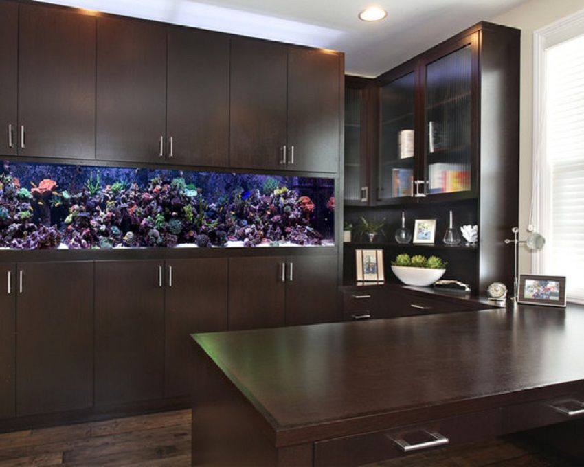 Custom Salt Water Fish Tank Cabinet Ideas