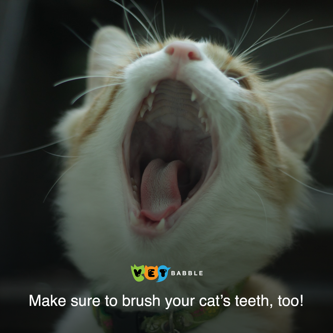 Brushing Your Cat S Teeth Dental Care For Your Cat Cat Health Cats Pets