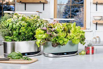 Aerogarden Indoor Gardens In 2020 Aquaponic Gardening 400 x 300