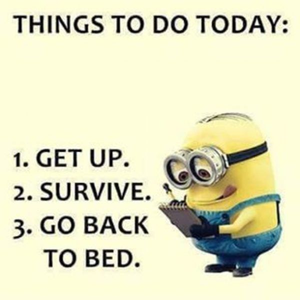 Best Funny Minion Quotes Wallpaper  Funny minion, Funny humor and Humor