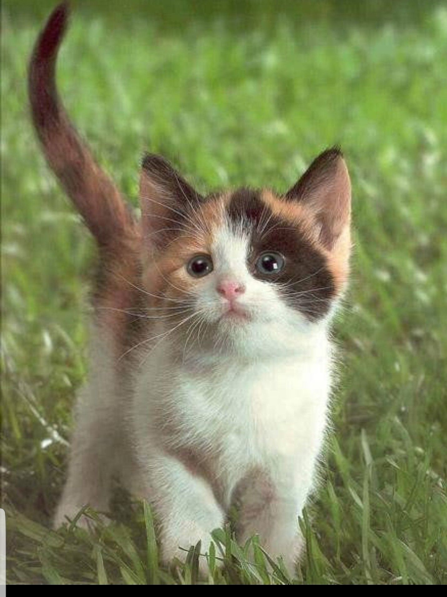 Pin by Dianna Campbell on Calico Cats Kittens cutest