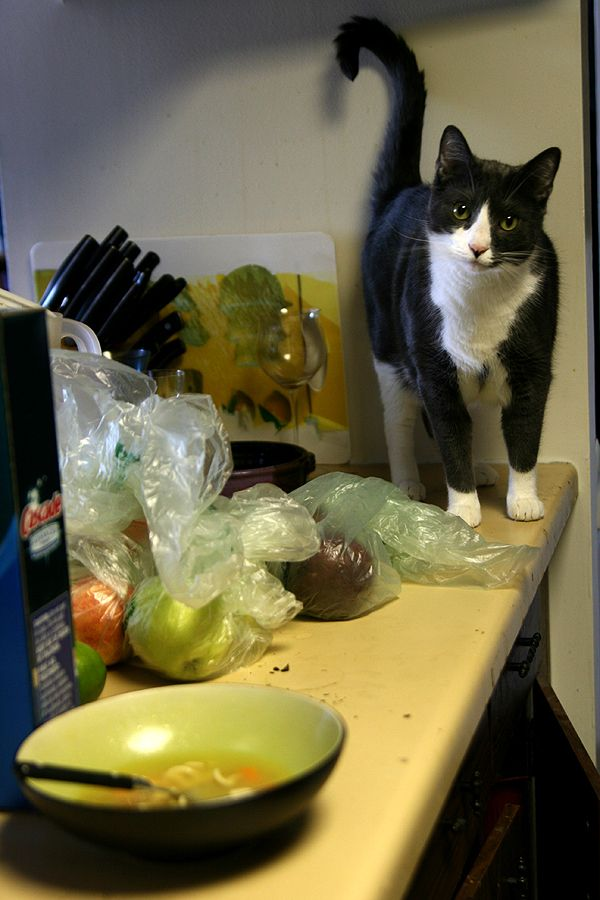 How To Keep Your Cats Off The Kitchen Counter Cats Crazy Cats Homemade Cat