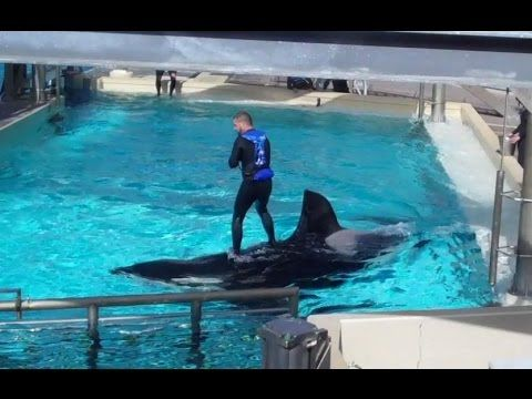 SeaWorld Trainers Still Riding Orcas Despite Legal Ruling