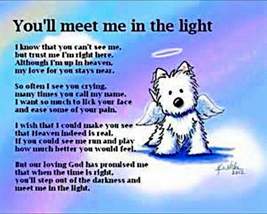 Pin by Lori Baur on Sympathy Loss Of Pet Pet loss quotes