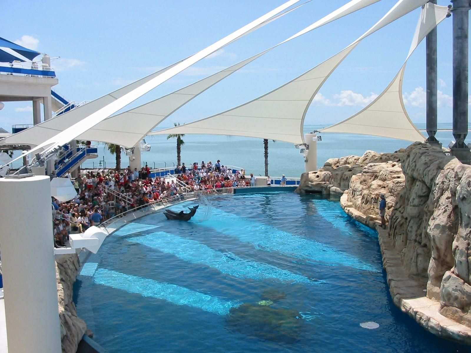 Corpus Christi Aquarium Texas State Dolphin Bay