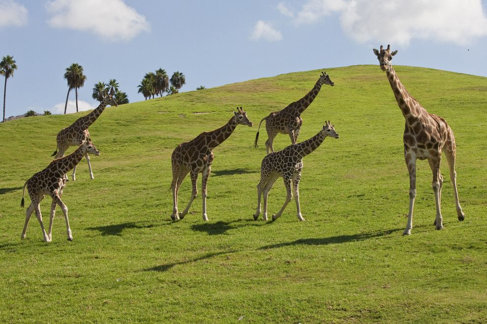 Vote - African Plains - San Diego Zoo Safari Park - Best Zoo Exhibit Nominee: 2015 10Best Readers' Choice Travel Awards