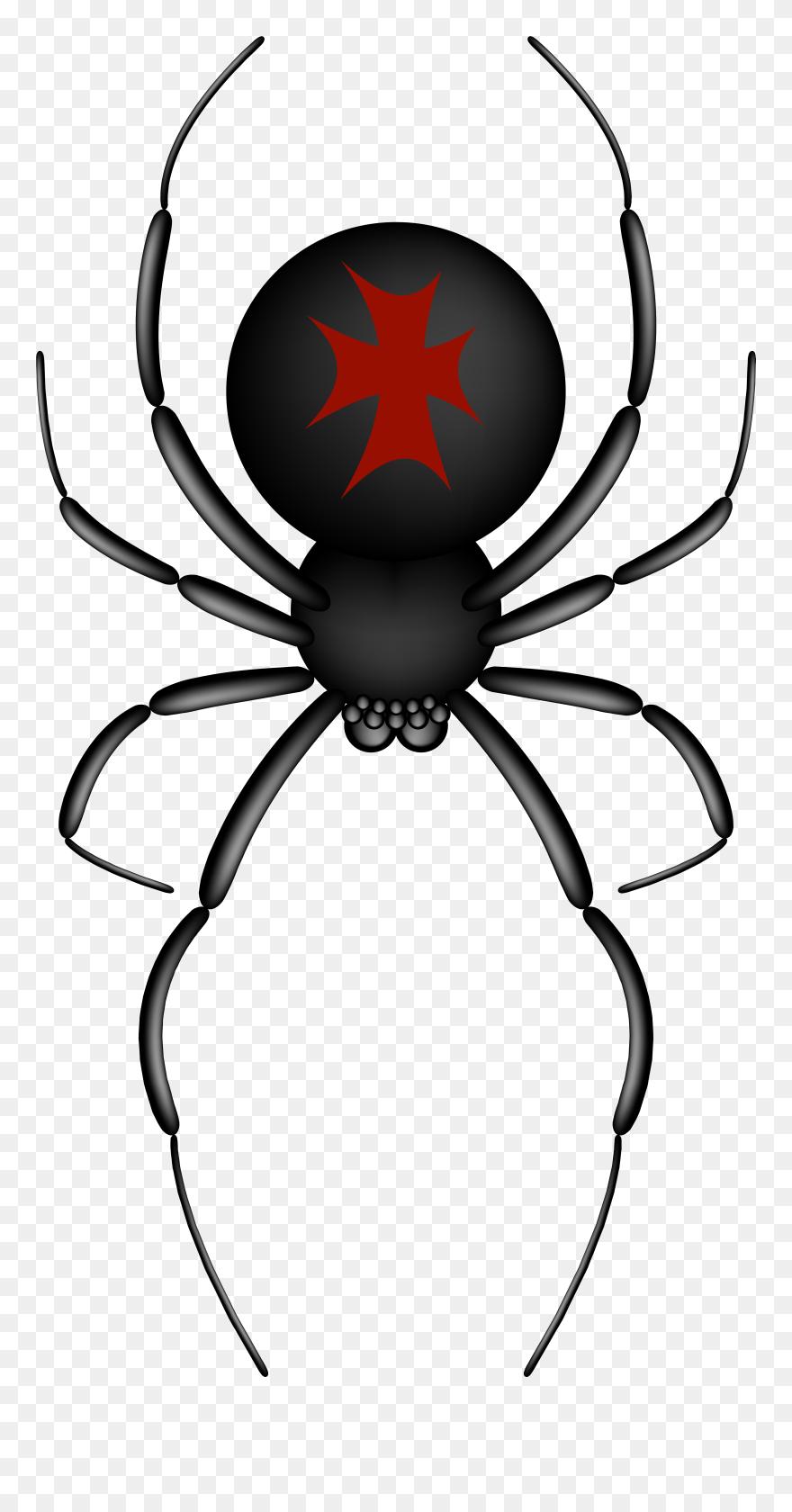 Download Hd Insects Spiders Spider Web Clip Art Cartoon Transparent Background Cartoon Clip Art Spider Png Download And Use Cartoon Clip Art Clip Art Art