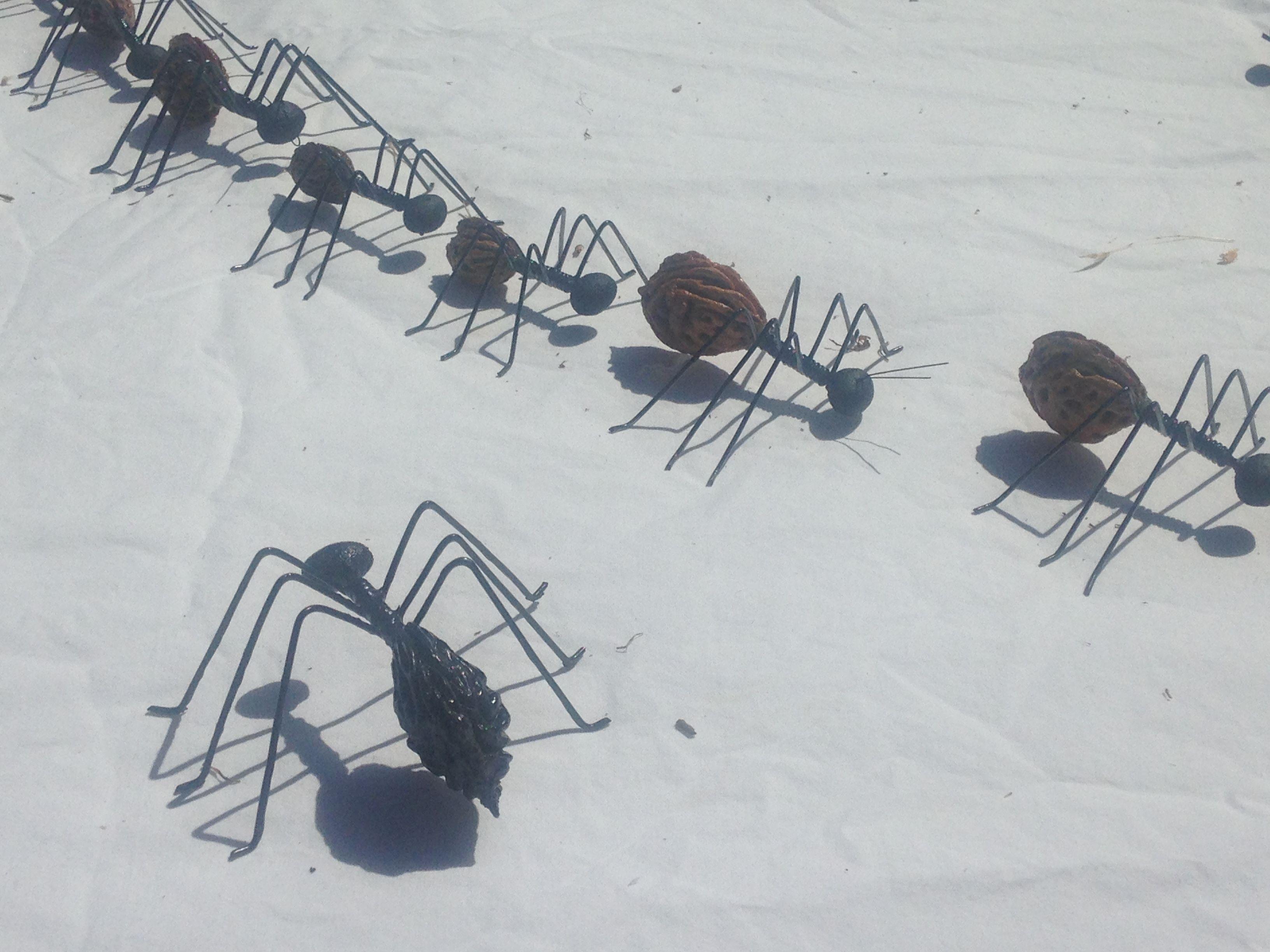 Aus Pfirsichkernen gebastelte Ameisen - die hab ich in Südafrika auf ...