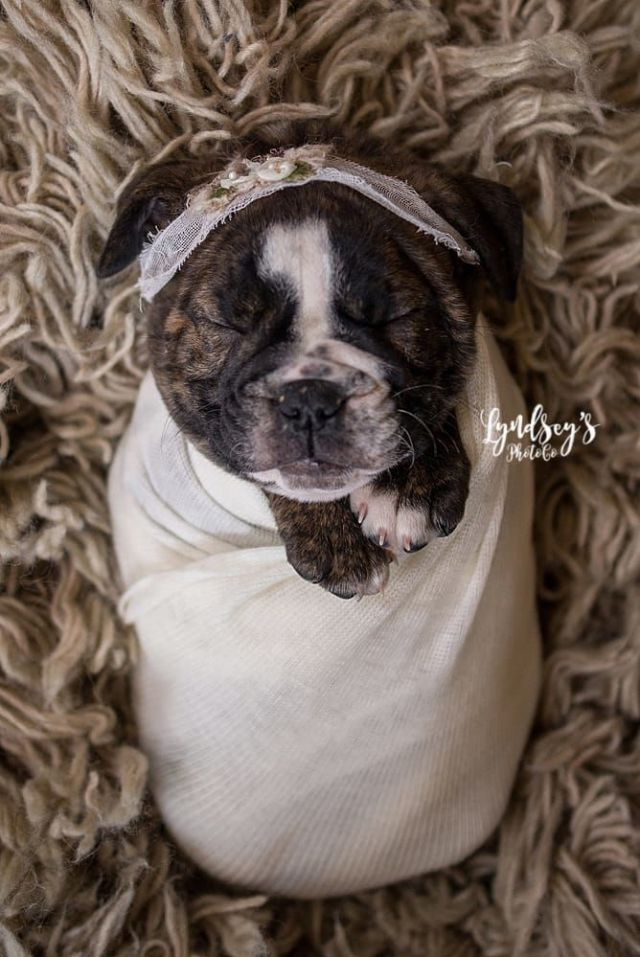 This Newborn Puppy Photoshoot Is The Cutest Thing We Ve Seen All