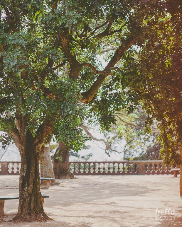 the botanic garden, nature photography, trees, sunlight
