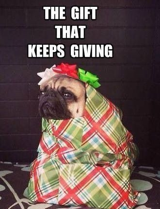 The Gift That Keeps On Giving Pugs Funny Cute Pugs Pugs