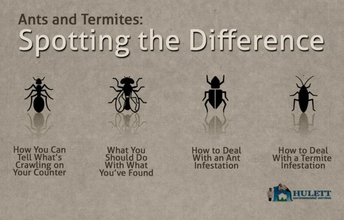 Pin By Hulett Environmental Services On Termites Home
