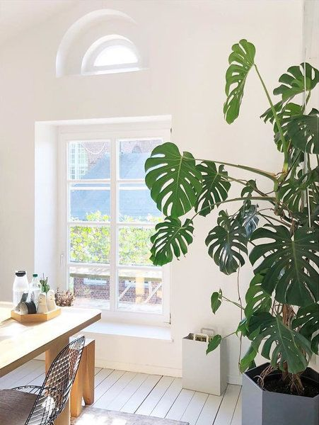 (K)ein grüner Daumen: Pflegeleichte Zimmerpflanzen