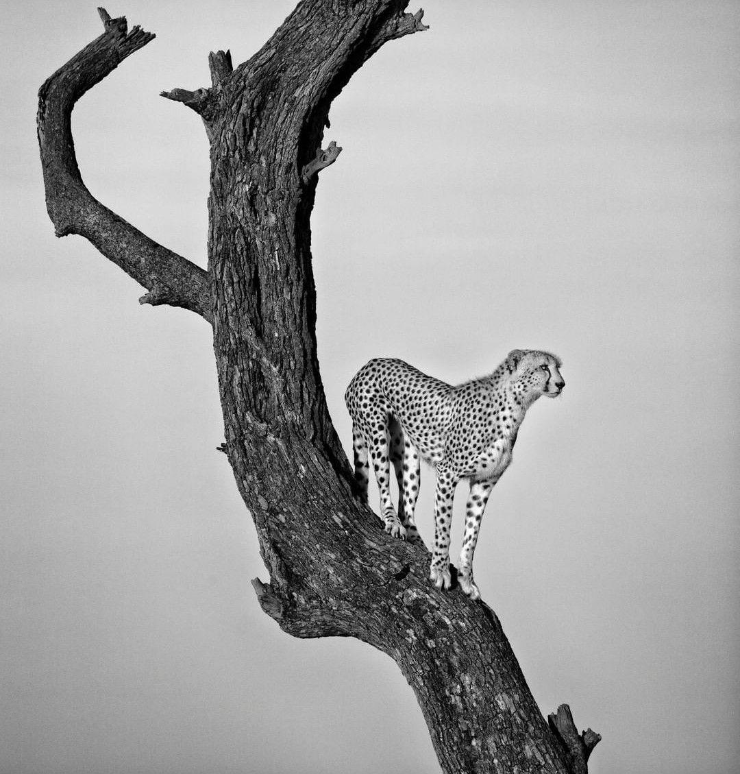 Pin by saad akhtar malik on wild life Animals, Most