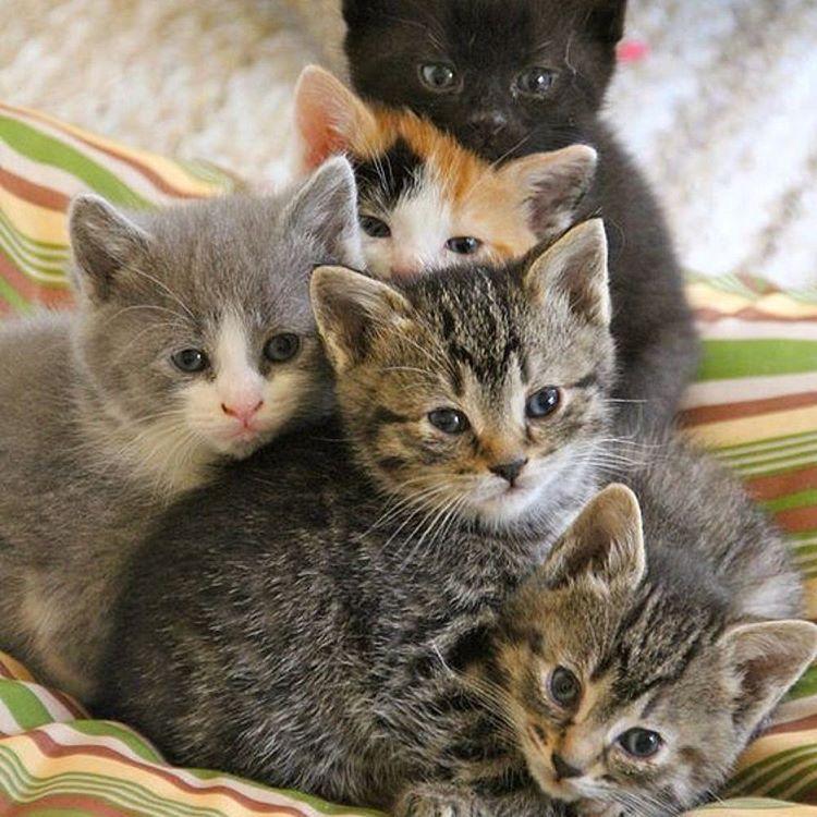 OMG, kittens !!
