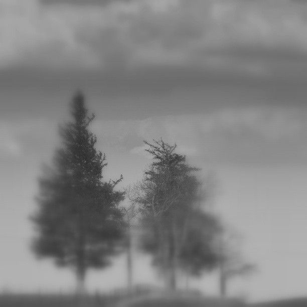 Trees in the fog. :)